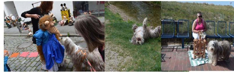 Menschen Mit Hund