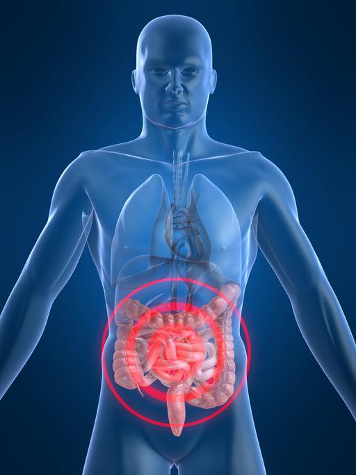 Magen-Darm-Beschwerden bei Diabetes - Diabetes -