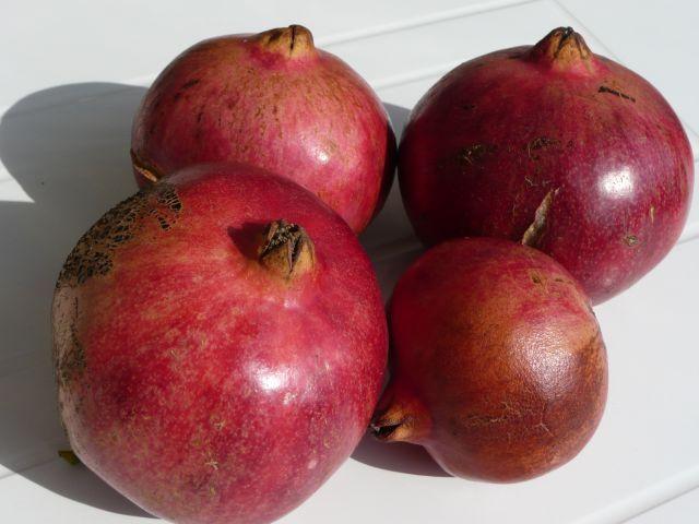 Olivenbaum Gelbe Blätter Sommer : der granatapfelbaum und seine frucht wissenswertes ~ Lizthompson.info Haus und Dekorationen