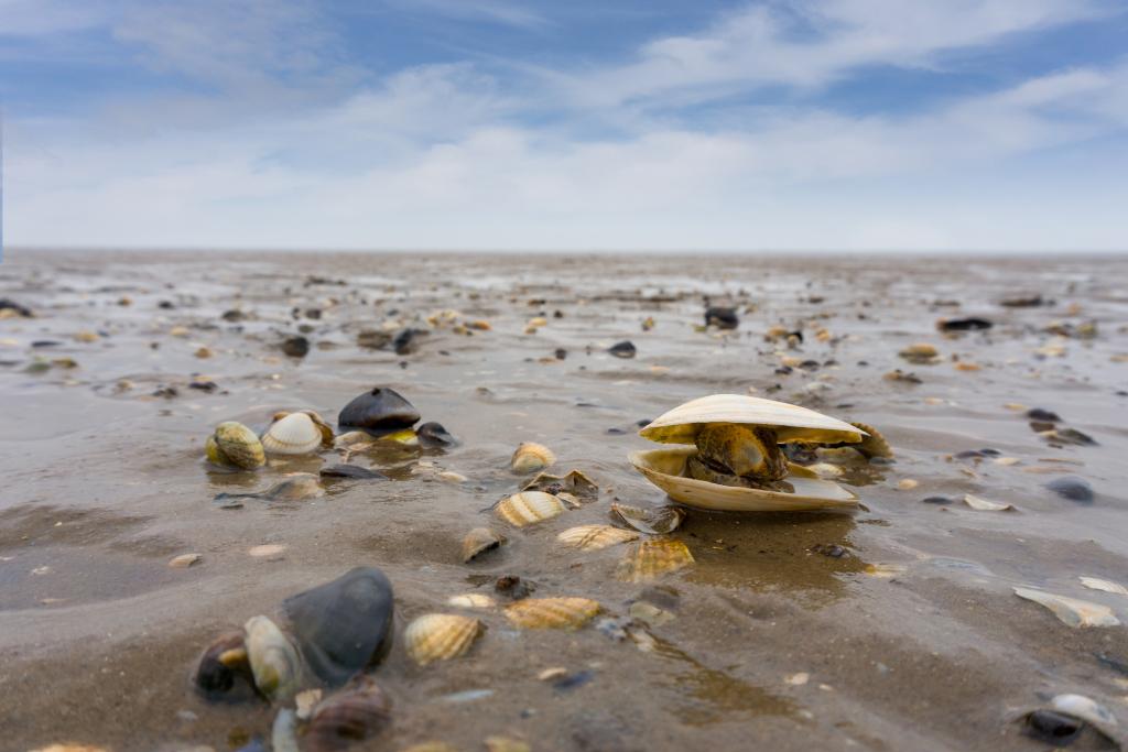 Wattenmeer mit Muscheln und Steinen