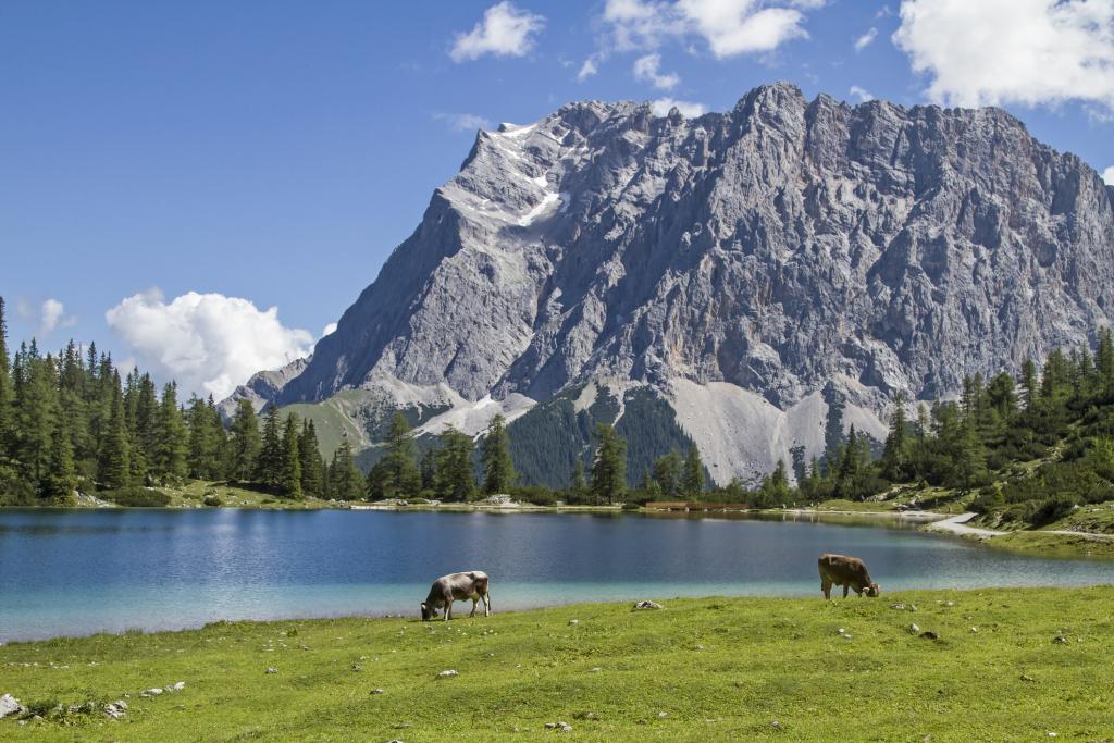 Berglandschaft, davor ein See und Kühe