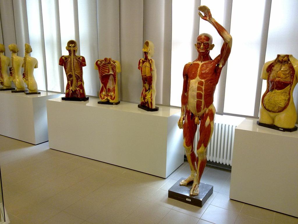 Anatomisches Institut - Erlebnisberichte - Leipzig -