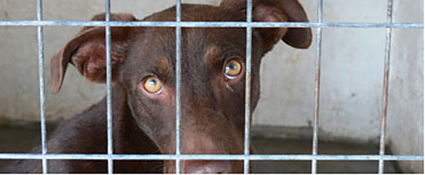 Hund hinter Gitter, Foto Pfoetchenhilfe Rhodos