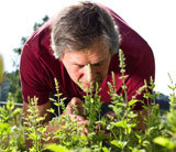 Mann riecht an Heilpflanzen