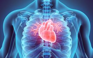 Grafik einer Brust mit Herz