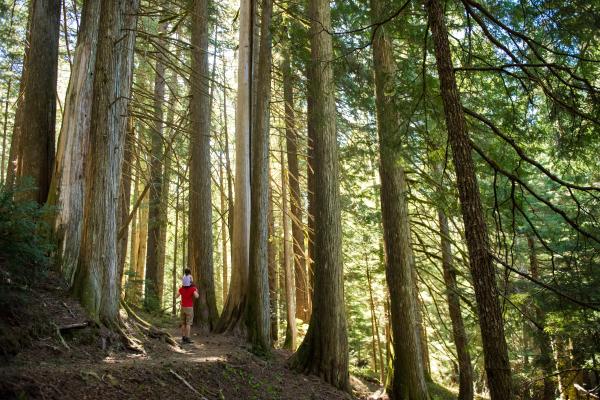 Spaziergang in urwüchsigem Wald