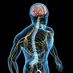 Grafik eines menschlichen Körpers und einiger Organe