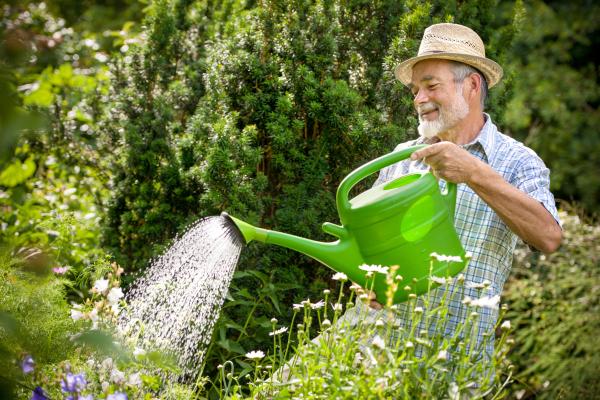 Senior gießt Pflanzen im Garten