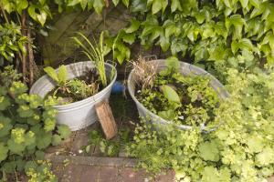 2 Zwinkwannen mit Wasserpflanzen