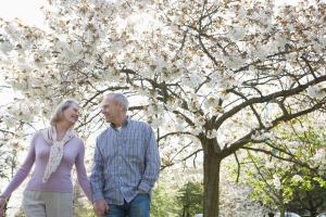 Paar unter blühendem Kirschbaum