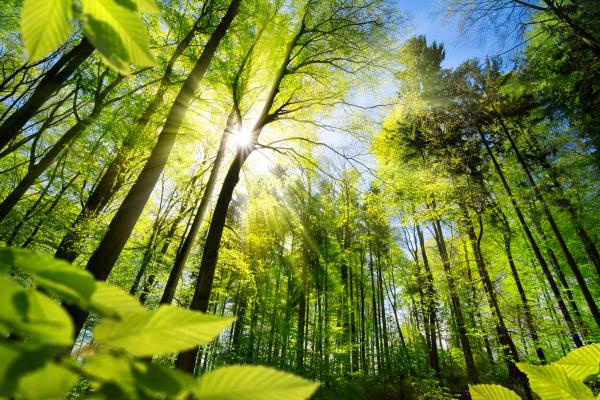 Waldlichtung im Frühlingswald mit Sonnenschein