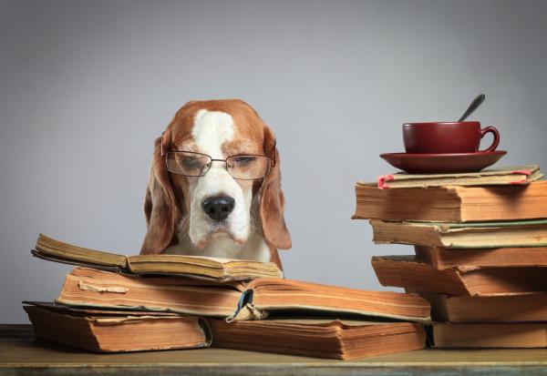 Hund mit Brille, der Bücher liest