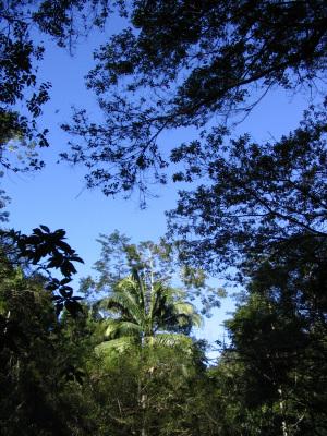 Palisanderbaum im regenwald  Feierabend - Webtreff für die besten Jahre
