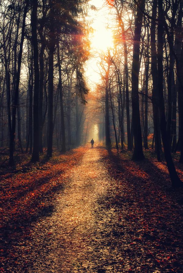 Wanderer auf einem Weg mitten im Wald bei Sonnentuntergang
