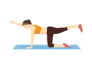 Illustration von Rückenübung im Vierfüßlerstand
