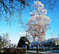 Winter an der Weser
